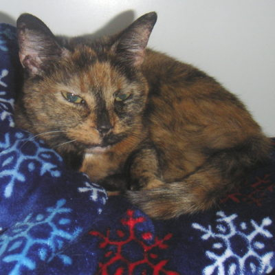 Chessie is a sweet little female tortie.