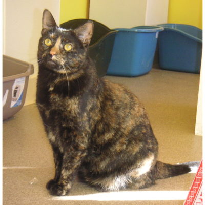 Gemma is a female tortie.