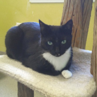 Lightning is an attractive black and white female.
