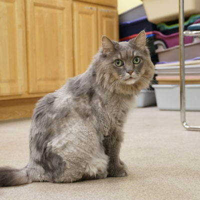 Lizzie is a friendly, long furred female.