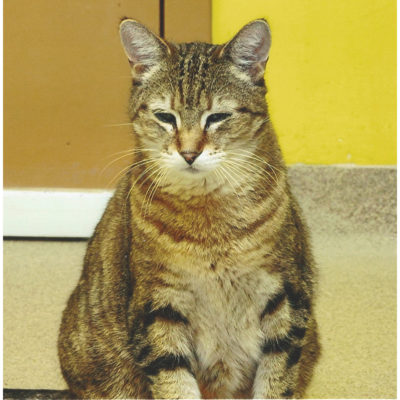 Lucky is a brown male tabby.
