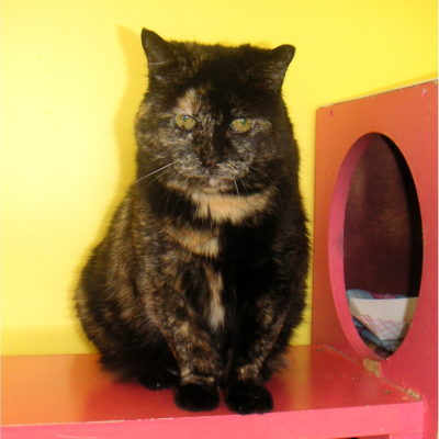 Maggie is a beautiful female tortie.