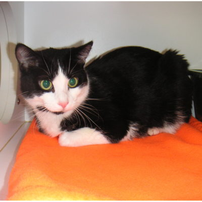 Pancho is a black and white male.