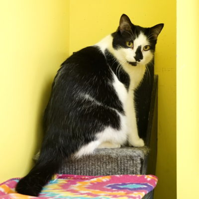 Ricky is a friendly white and black male.