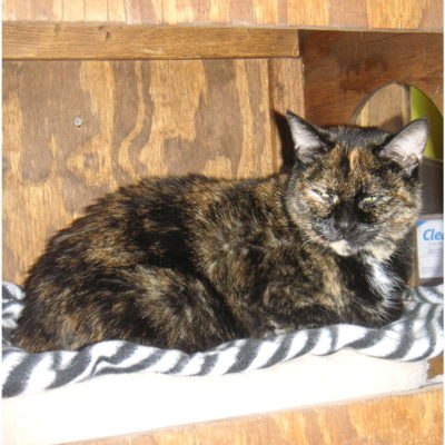 Spice is an outgoing female tortie.