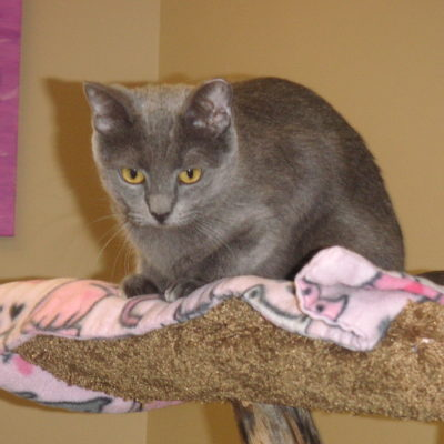 Sunny is a small gray female.