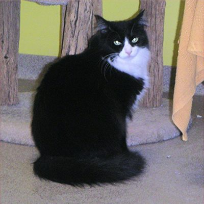 Rio is a handsome, but very shy, long furred male cat.